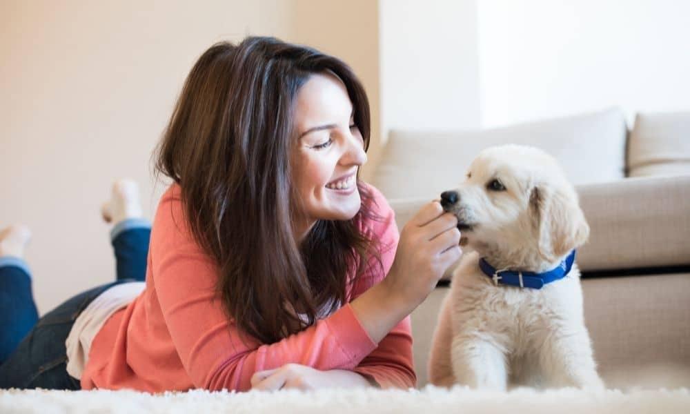גור כלבים על שטיח עם אישה