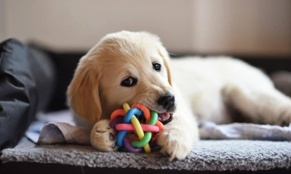 צעצועי הלעיסה הטובים ביותר לכלבים