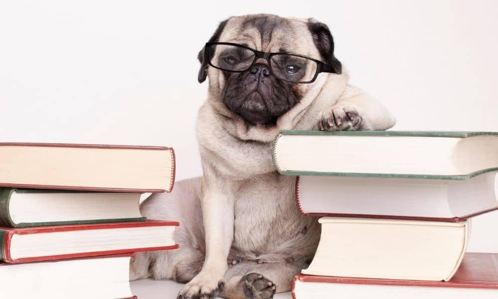 כלב חכם