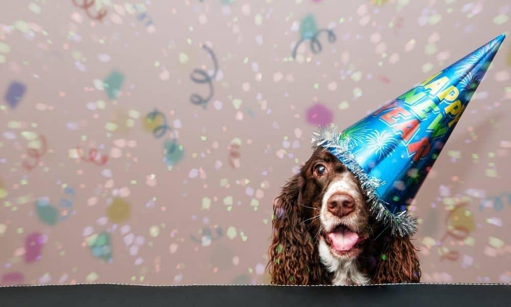 כלב חוגג יום הולדת