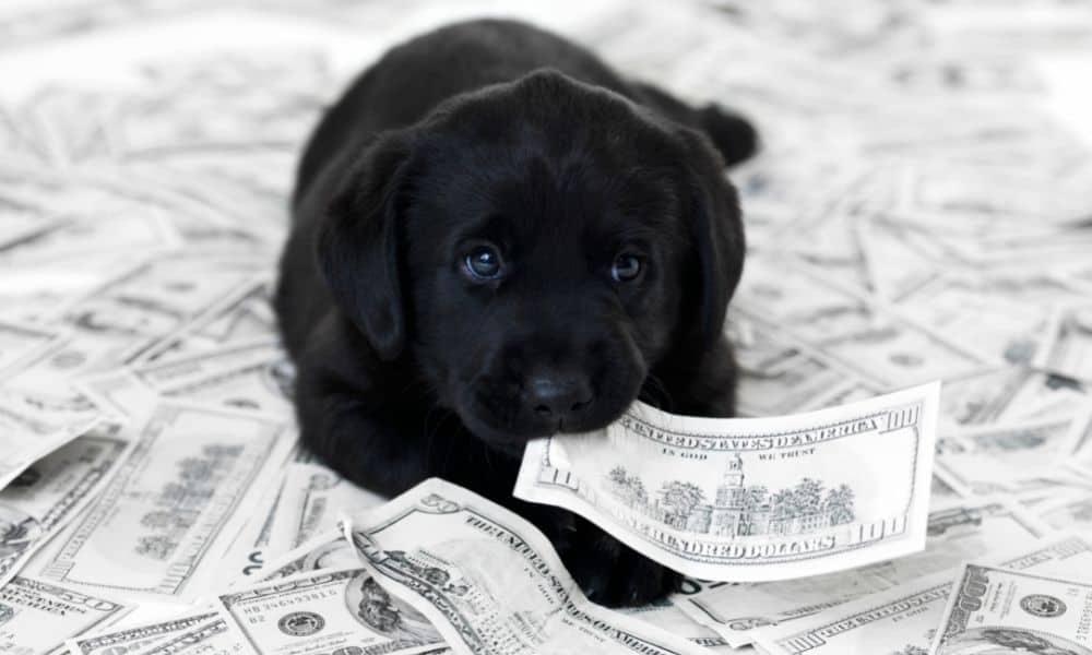 הכלב הכי יקר בעולם